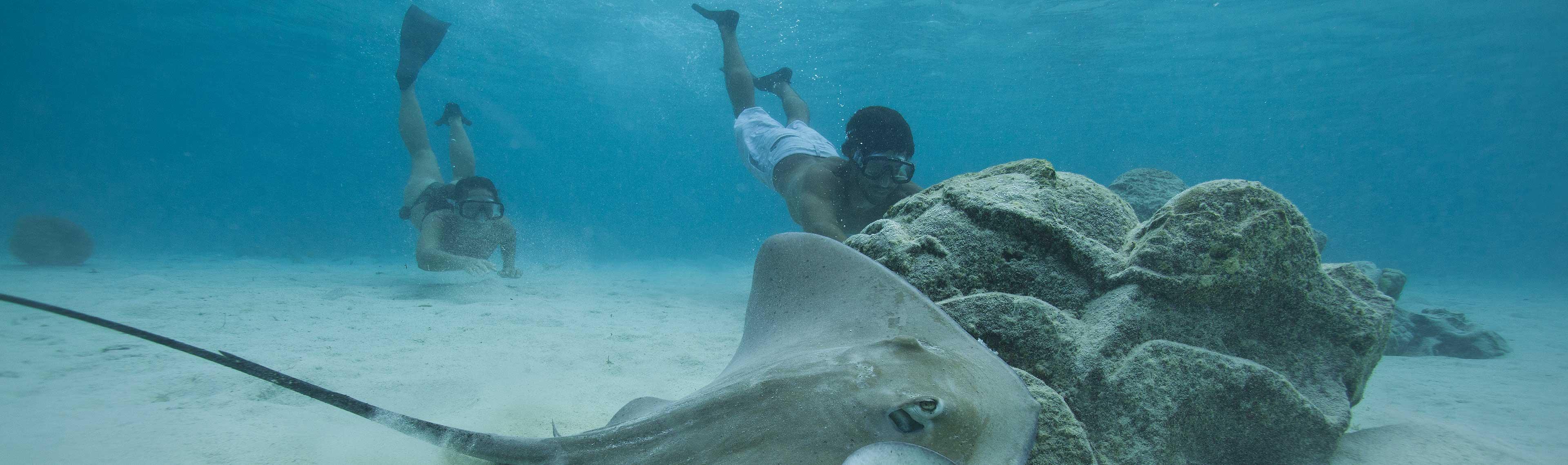 tahiti diving and snoreling