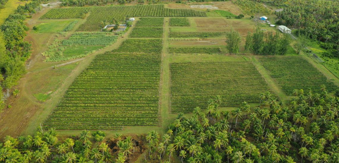 https://tahititourisme.nz/wp-content/uploads/2017/08/Vin-de-Tahiti_1140x550-min.png
