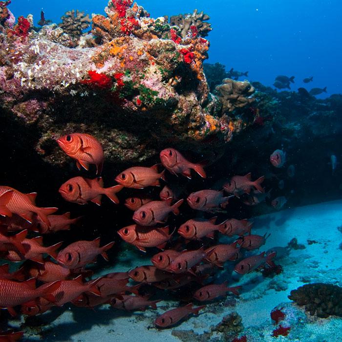 100% diver paradise