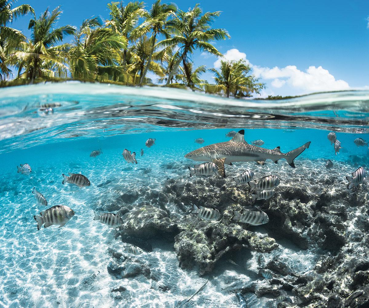 https://tahititourisme.nz/wp-content/uploads/2018/02/sejours-iles-tuamotu-fakarava-paradis-des-plongeurs-requins-e-tahiti-travel.jpg