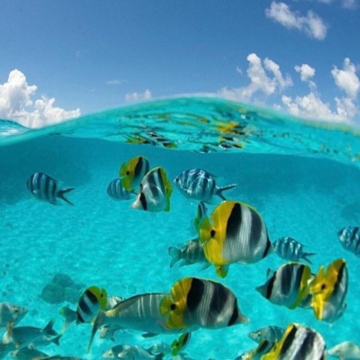 Diving  – Le Maitai Polynesia – Bora Bora