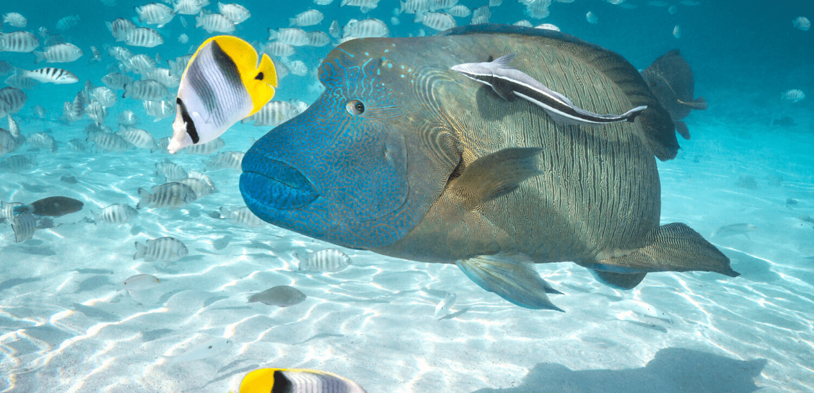 https://tahititourisme.nz/wp-content/uploads/2020/02/SnorkelingExpeditions2_1140x550-min.png