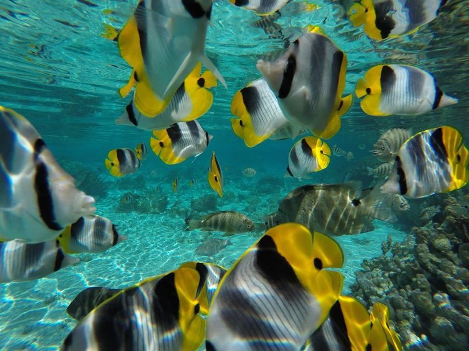 https://tahititourisme.nz/wp-content/uploads/2020/06/jardin-corail-tahaa-5.jpg