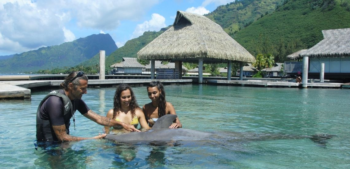 https://tahititourisme.nz/wp-content/uploads/2021/01/Offre_Moorea-Dolphin-Center.jpg