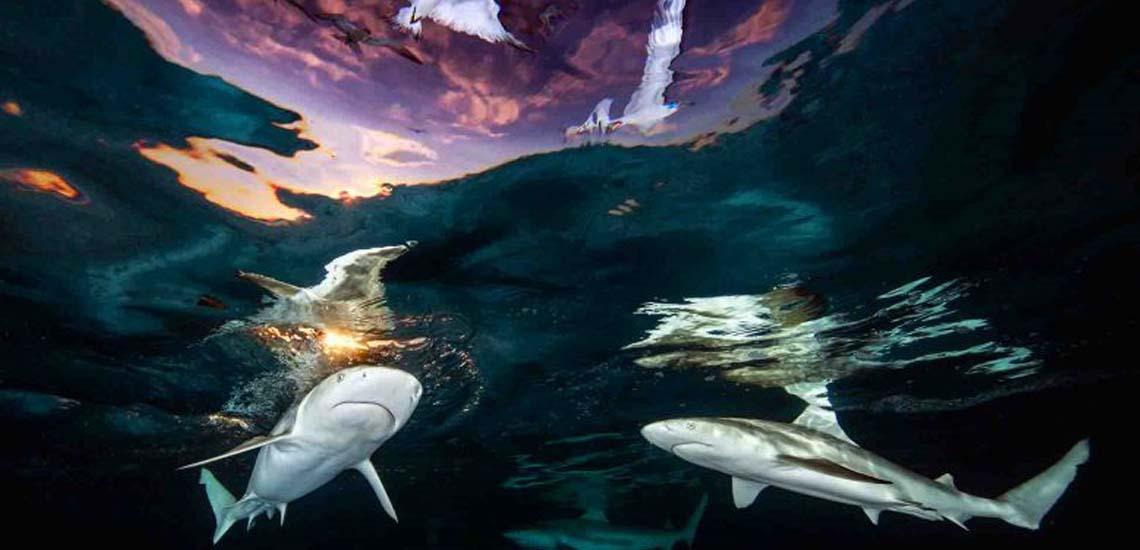 Sharks' Skylight